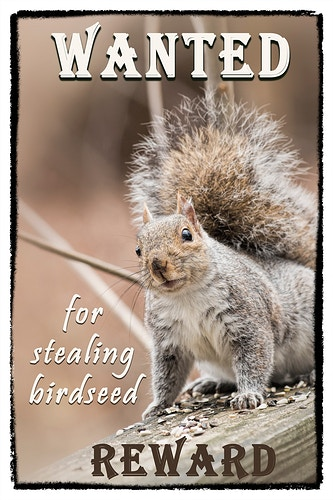 2 - Farm Animal Photography & Greeting Cards for Sale in NJ | Barnyard Moments