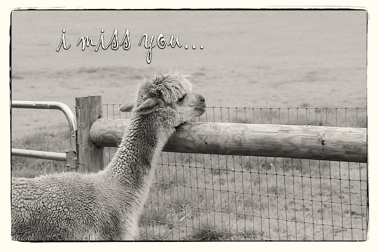Black And White - Farm Animal Photography & Greeting Cards for Sale in NJ   Barnyard Moments