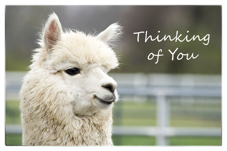 Say It With Words - Farm Animal Photography & Greeting Cards for Sale in NJ | Barnyard Moments
