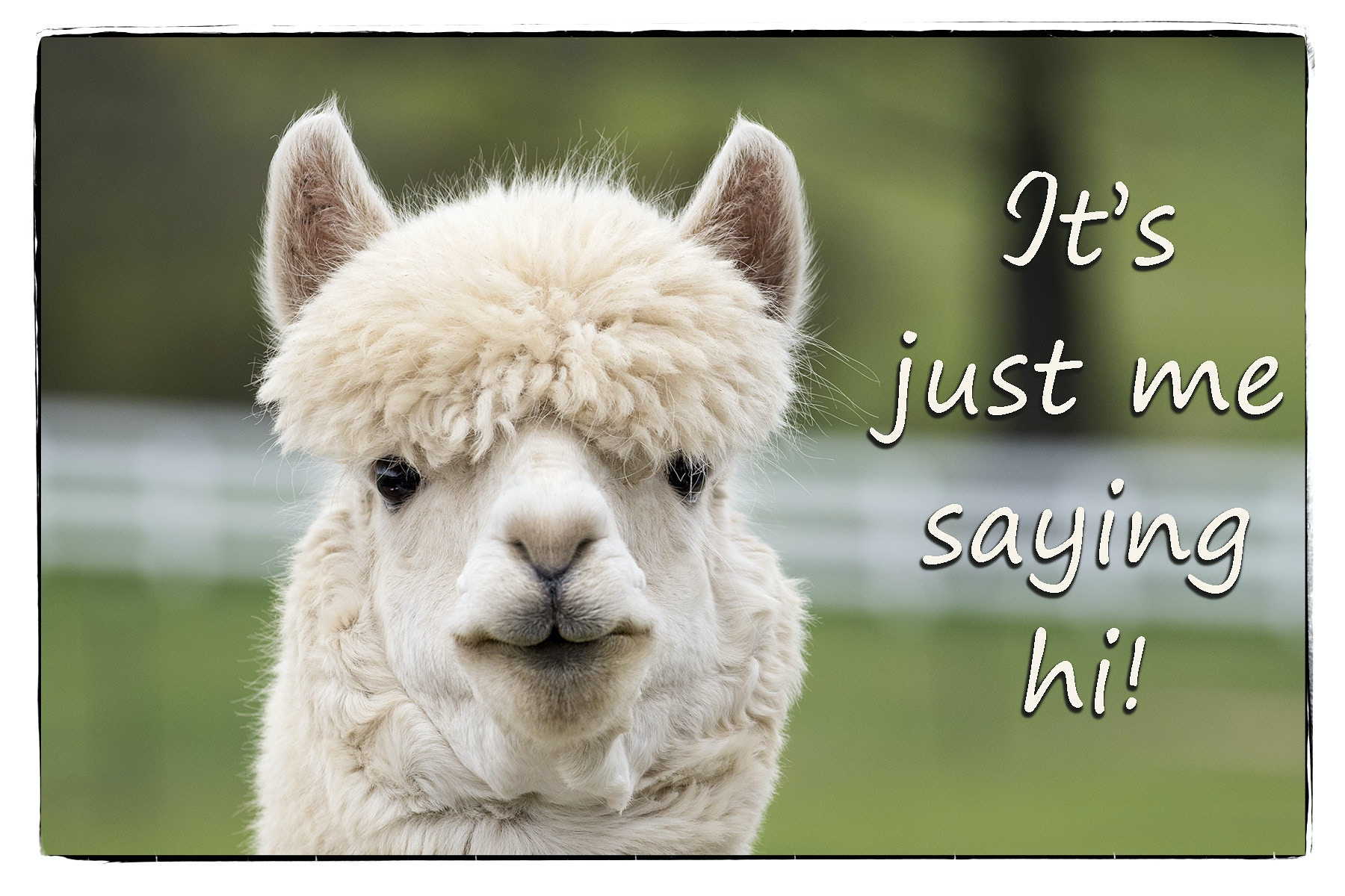 Say It With Words Farm Animal Photography Greeting Cards For