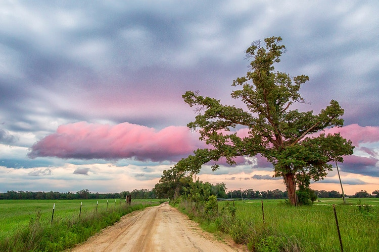 Country Road Take Me Home - Becky Bardin Photography