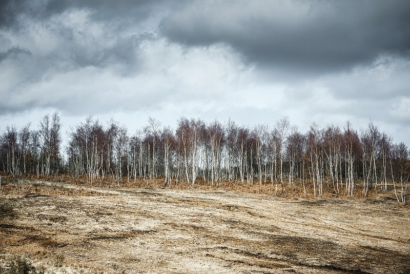 Ashdown Forest - Benno White Fine Art Photography