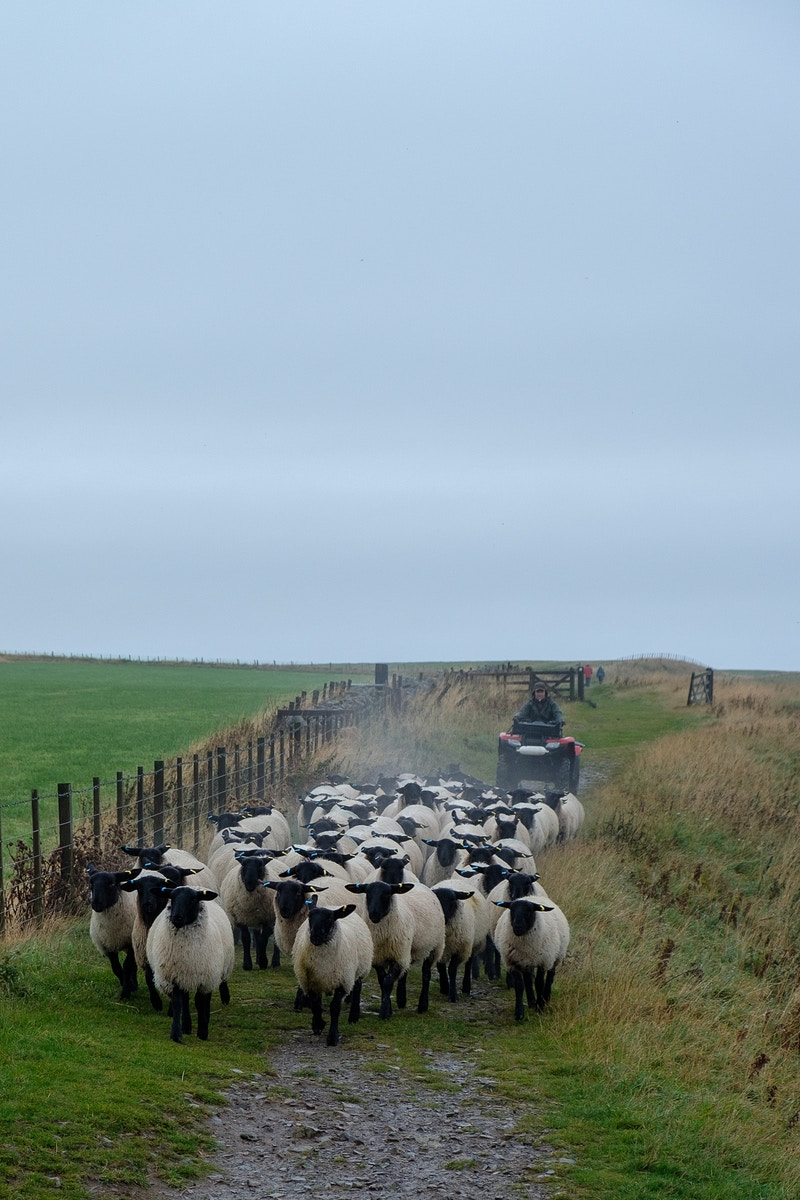 Shepherding in the 21st Century - Ben Ruset Photography