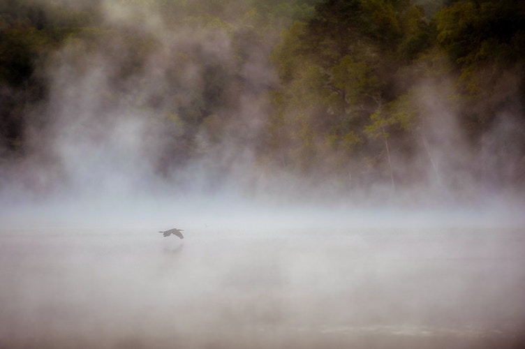 Great Blue Heron In The Mist - Bradel Images