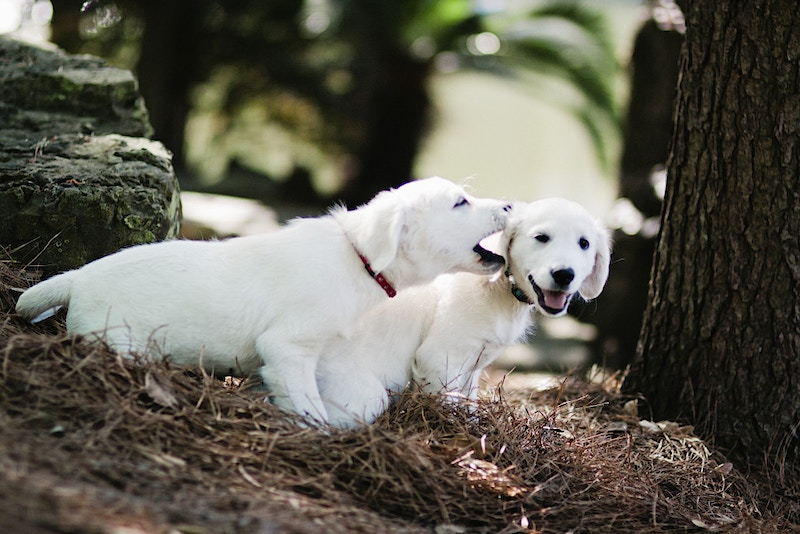 Puppy Love - Nancy Love Photography
