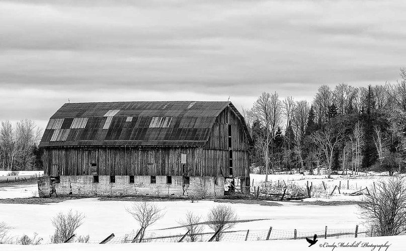 Old Cattle Barn-B&W_7724 - Cindy Mulvihill Photography
