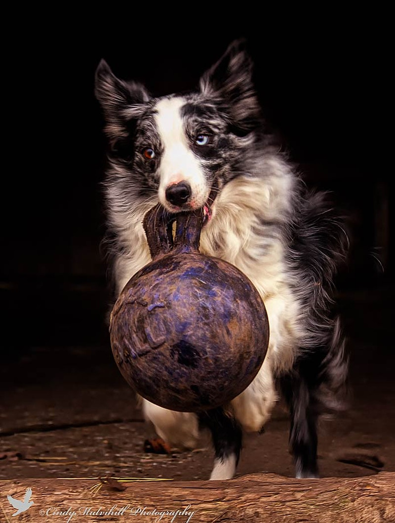 Play Ball_ - Cindy Mulvihill Photography