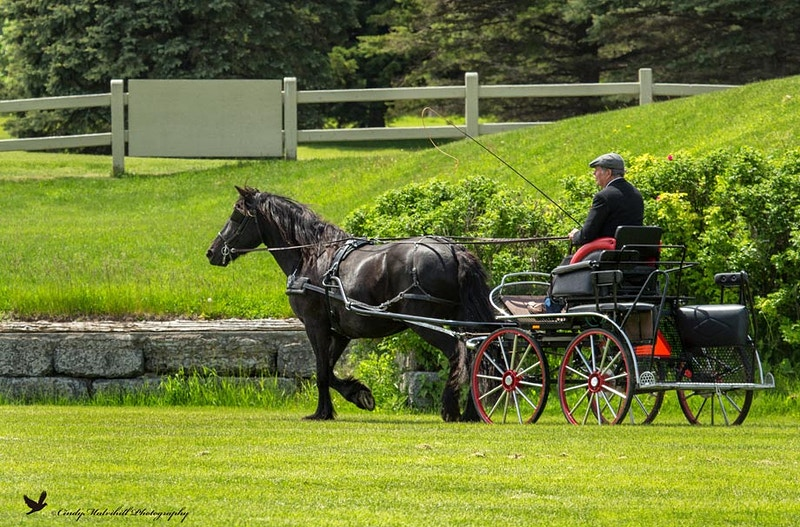 Ottawa Horse Day 2017 - Cindy Mulvihill Photography