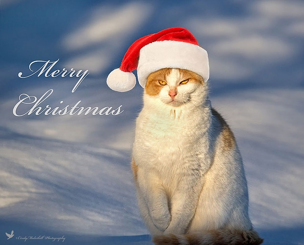 Santa Cat - Cindy Mulvihill Photography