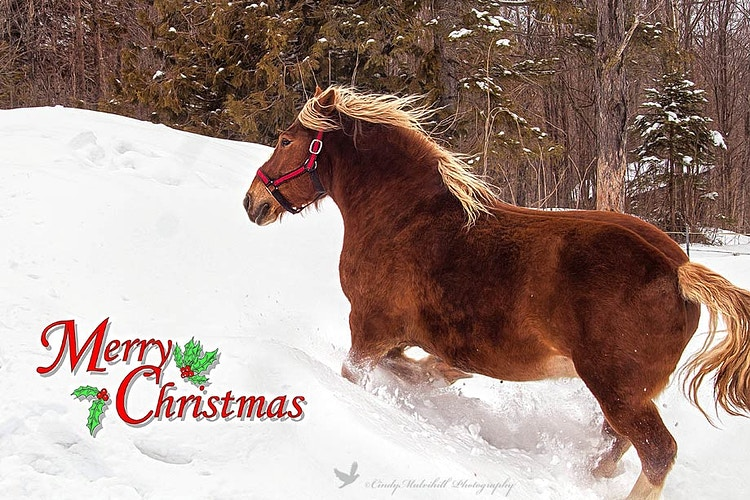 Dashing Through the Snow - Cindy Mulvihill Photography