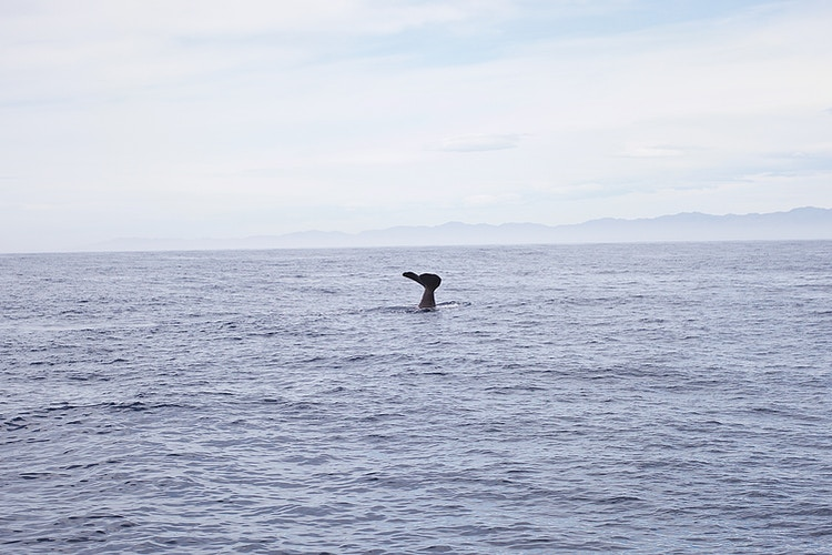 Whale Watching - Cole McDaniel Photography