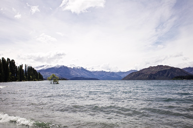 That Wanaka Tree - Cole McDaniel Photography