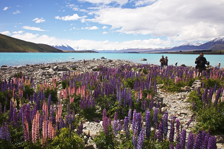 Lake Tekapo - Cole McDaniel Photography