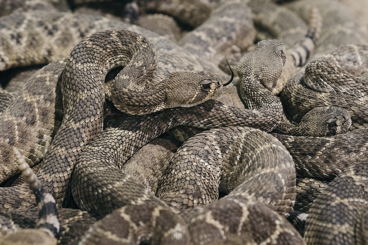 An Economy Built On Snakes Personal Project - Cooper Neill | Dallas Freelance Photographer