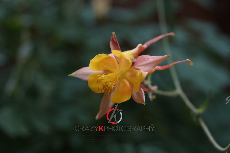 Flora - Crazy K Photography Inc.