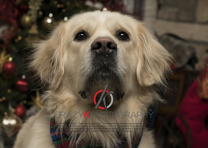 Pet Photography - Crazy K Photography Inc.