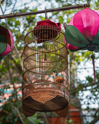 A birdcage on the street in Hanoi, Vietnam - Daniel John Photography