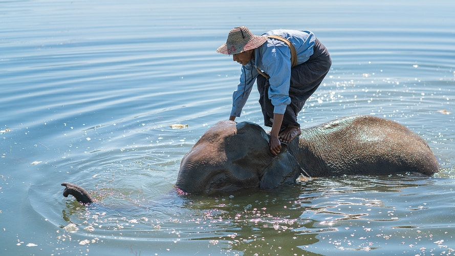 A man bathing his elephant in Loikaw Myanmar - Daniel John Photography