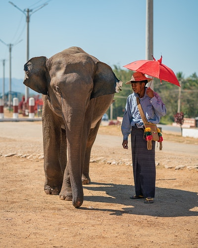 A man wearing a traditional longyi and holding an umbrella next to his elephant in Loikaw, Myanmar - Daniel John Photography