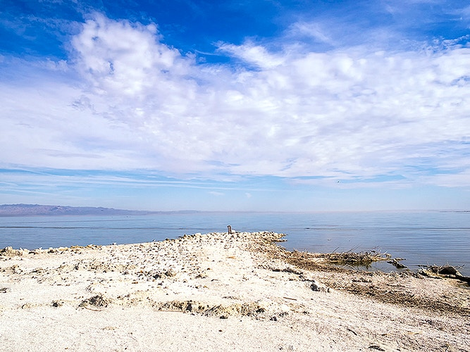 Salton Sea - Dennis O'Reilly
