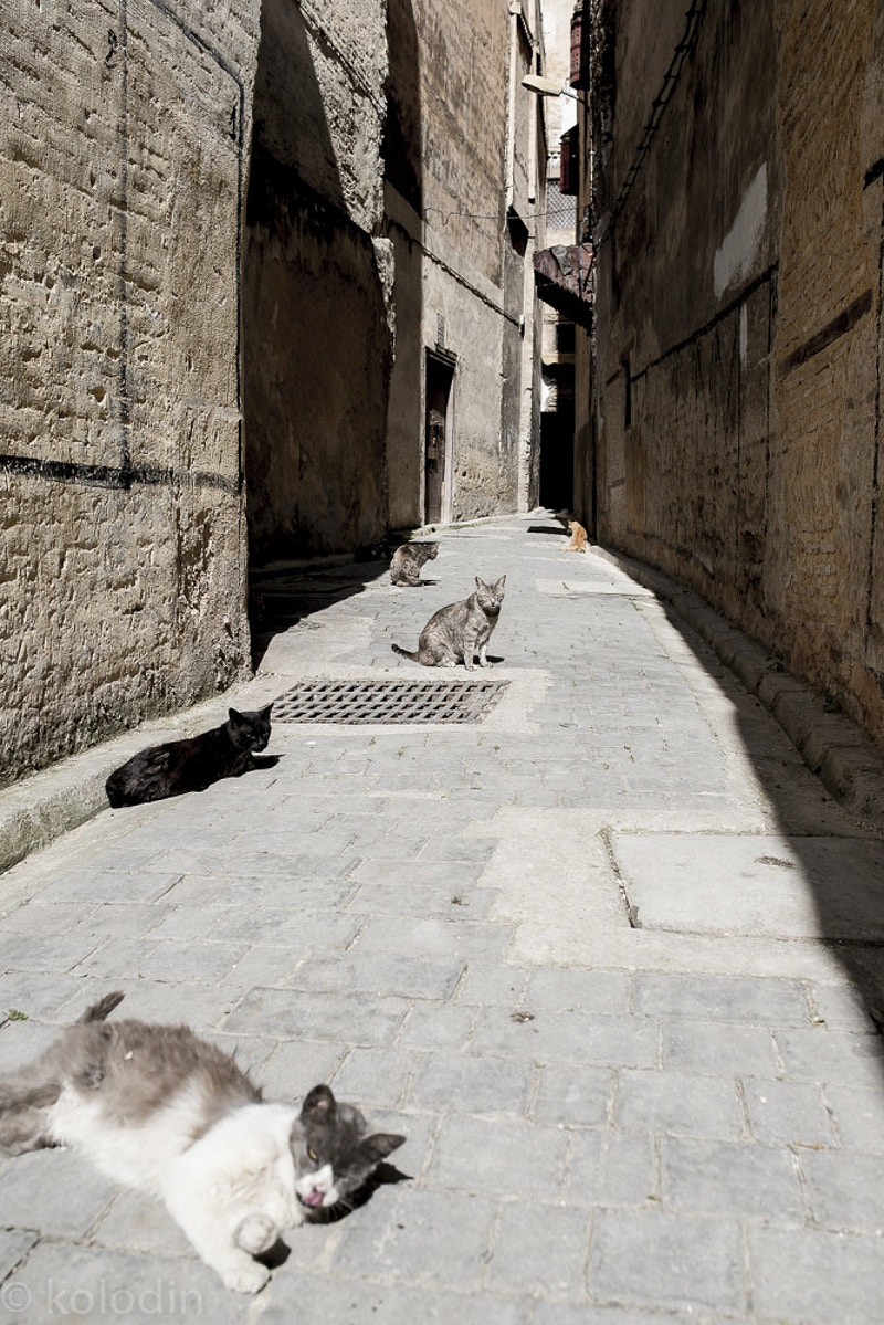 Alley Cats in Medina, Fez - dGkPhotography