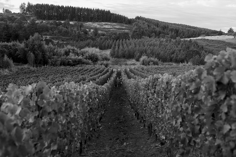 Winemaking - Easton Richmond Photography