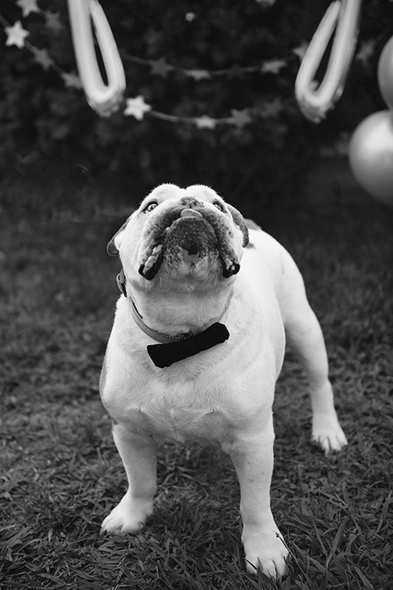 Pets - Emily Stamp Photography