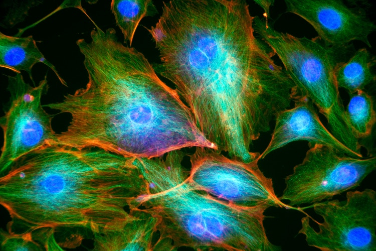 BPAE Cells - Ethan Whitecotton Photography
