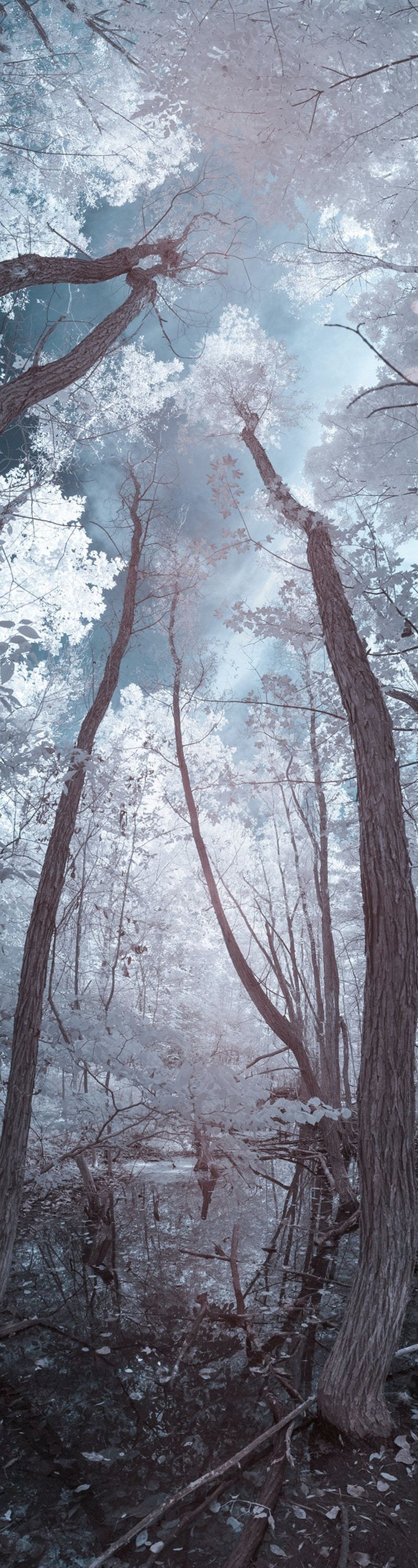 A Study In Infrared - Ethan Whitecotton Photography