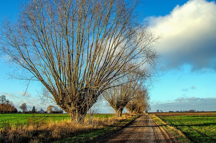 Country road with willows - Elle Lens