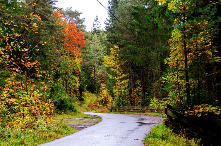 The road through the autumnal forest - Elle Lens