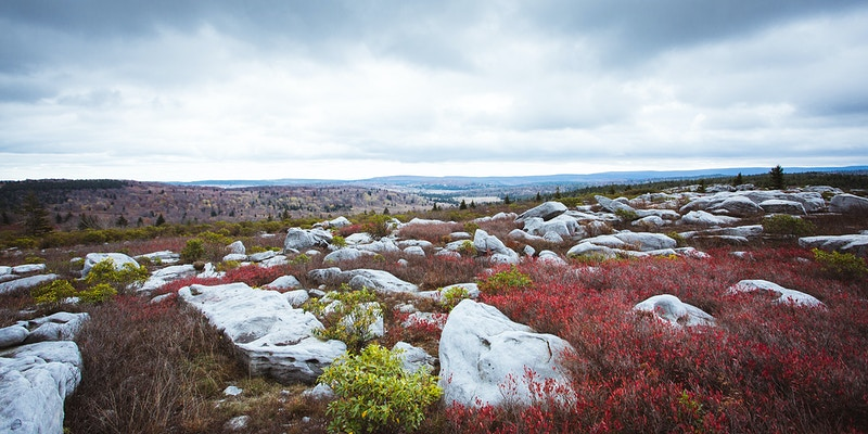 Dolly Sods - Dan Evans Photography