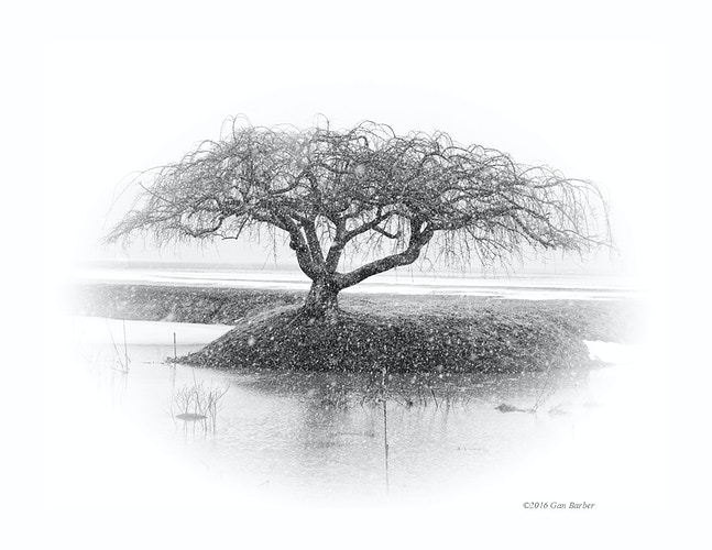 Lonely Tree - Gan Barber Fine Art Photographs