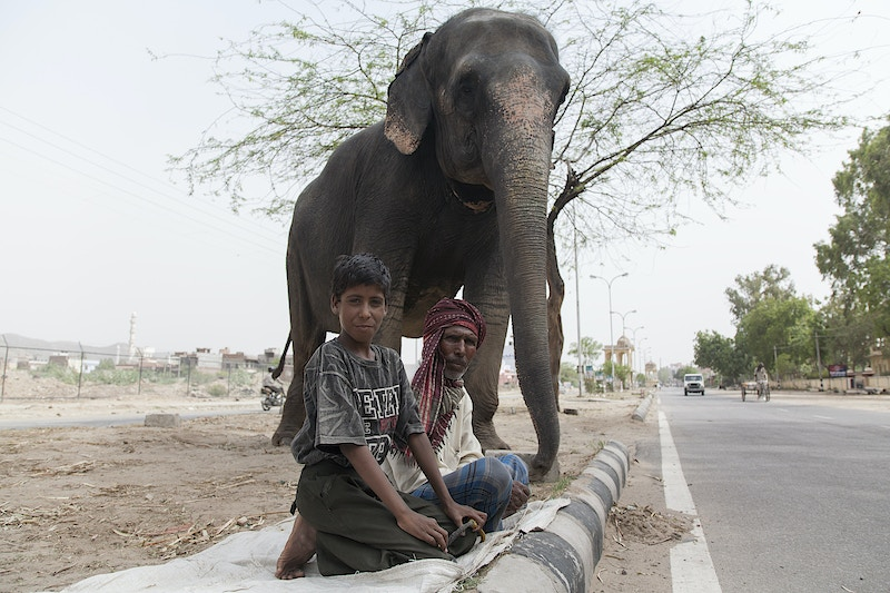 TWO MEN AND AN ELEPHANT - GRAHAM GUY BARRATT