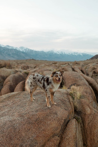 Owens Valley Ca - Hailey Magoon Photography