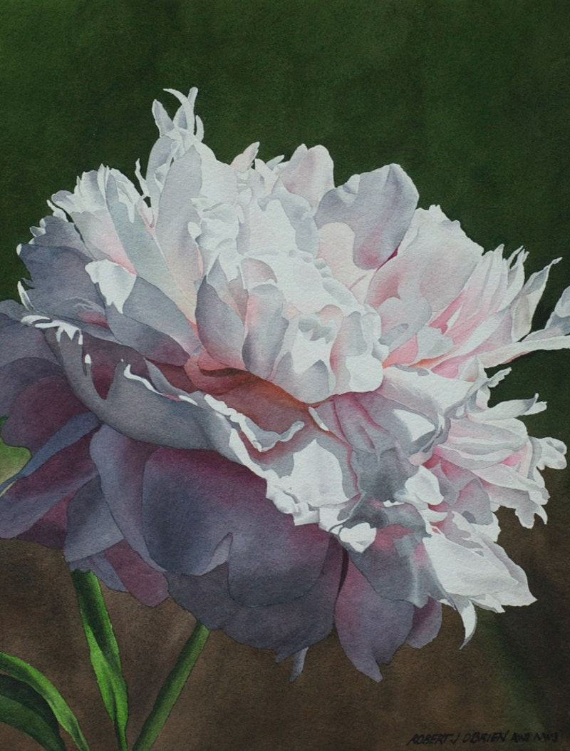 Peony in Morning Shadow - Hunter Gallery of Fine Art, Grafton, VT