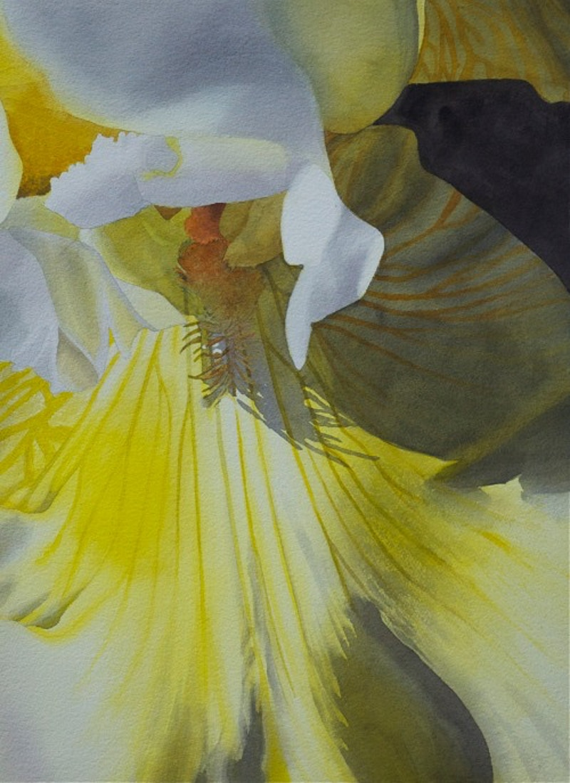 Yellow Bearded Iris - Hunter Gallery of Fine Art, Grafton, VT