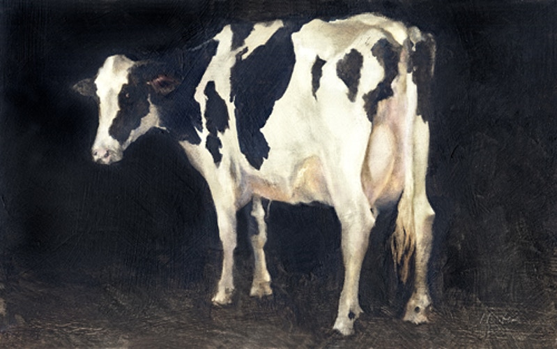 COWS: HOLSTEIN - Charlie Hunter