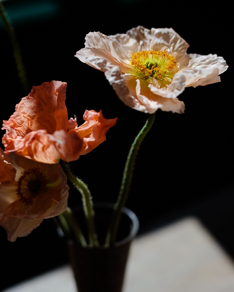 Papaver - James Elliot Bailey - LA Photographer