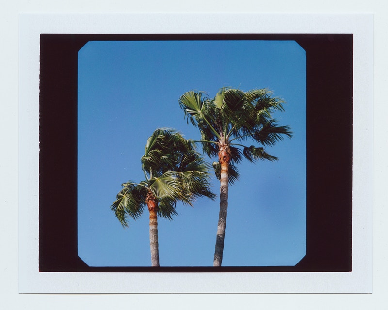 Polaroid Palms - James Elliot Bailey - LA Photographer