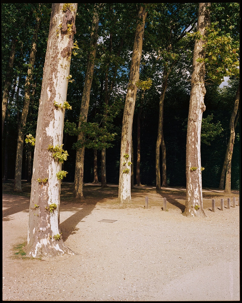 trees of Versailles - James Elliot Bailey - LA Photographer