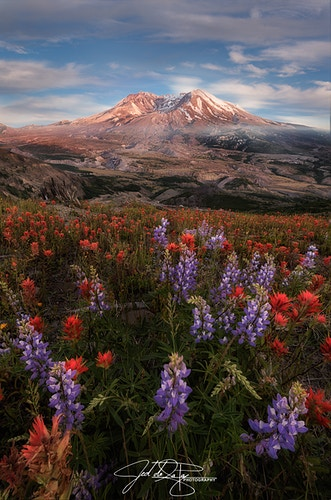 Wildflowers at St. Helen - Jed de la Paz Photography