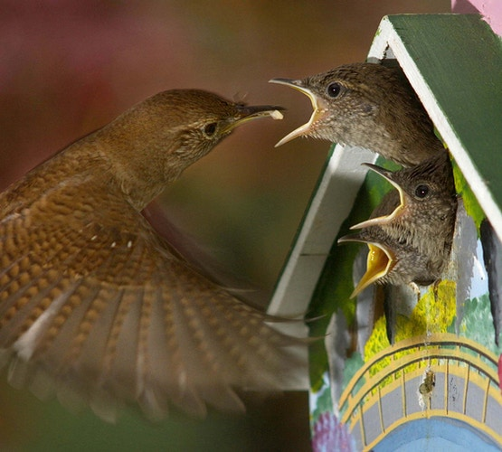 For The Birds - Jerry Jackson photography