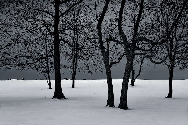 Trees - Jean-Marc Bara PHOTOGRAPHY
