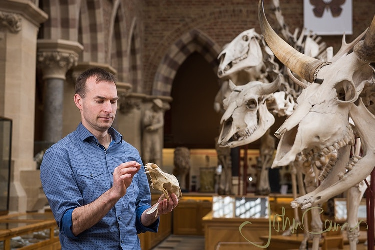 Professor Greger Larson - Photographed at the Museum of Natural History for Science Magazine (https://www.sciencemag.org) for his research into the domestication of dogs. - John Cairns Photography