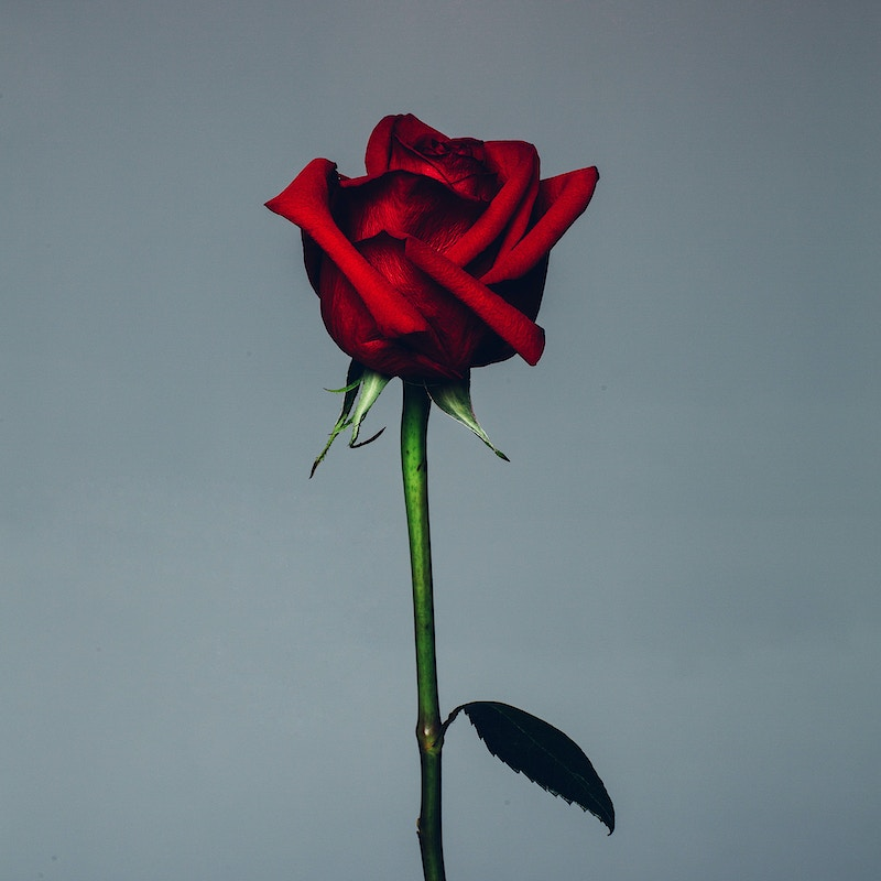 rose | 03.07.15 - John Tieu Photography