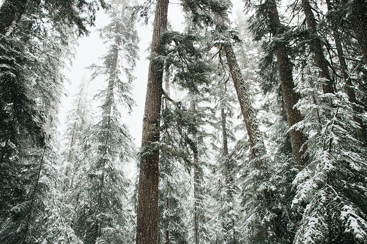 Trees in the Snow - Jordan Voth | Seattle Wedding & Portrait Photographer