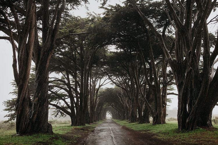 Cypress Tree Tunnel - Jordan Voth | Seattle Wedding & Portrait Photographer