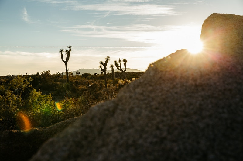 Rocky Sun Flare - Joshua Tree - Josh Sheldon Photography