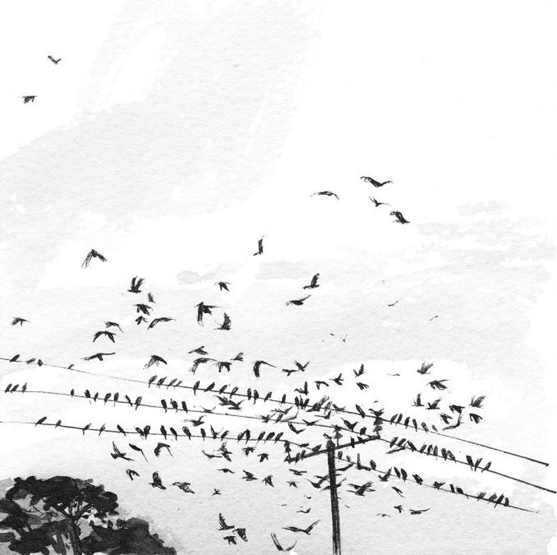 birds on high wires - KATE WELLS artist